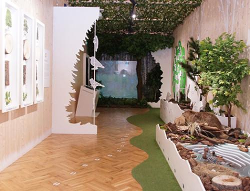Kompleksowa realizacja wystawy Tajemniczy Las w Bukowcu
